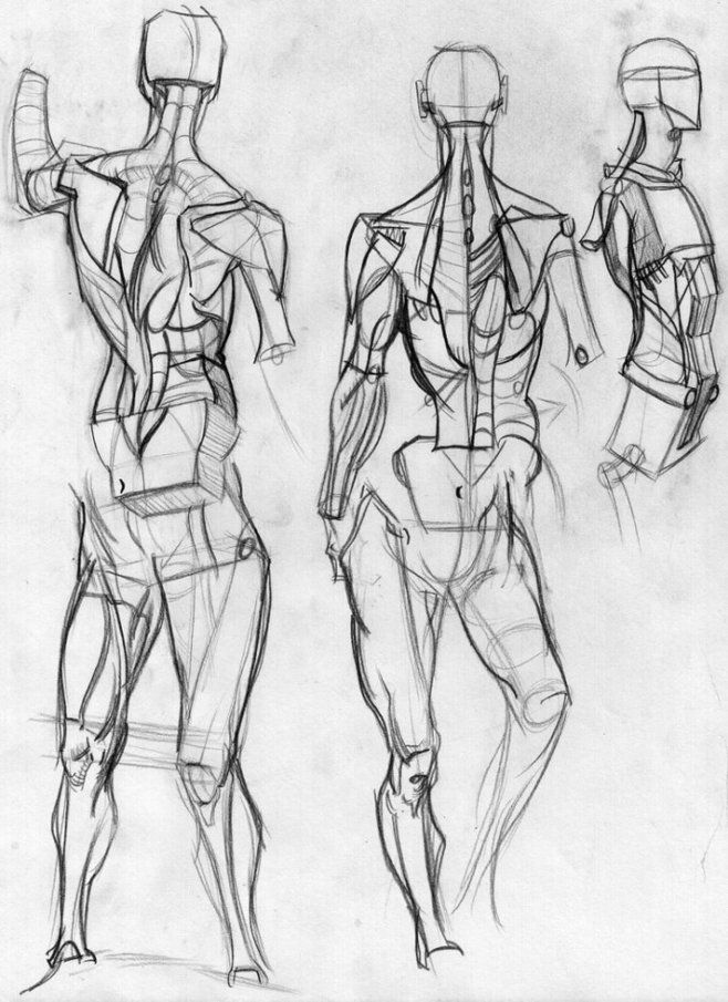 804 best Anatomy images on Pinterest | Action pose reference, Action ...