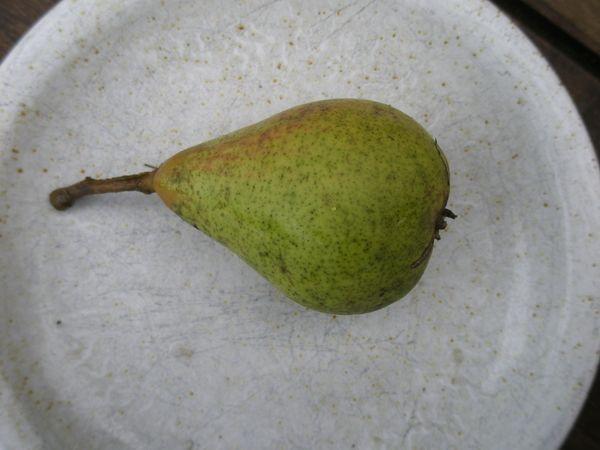 Pyrus com. 'Vekovaja', päron. Rysk höstsort. Stora gröna frukter som rodnar på solsidan. Härdigt träd, zon III-IV