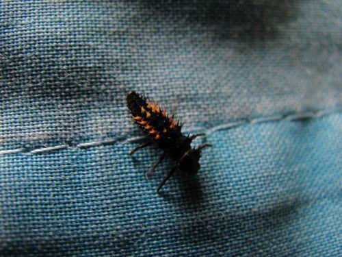 Insecto místico :o