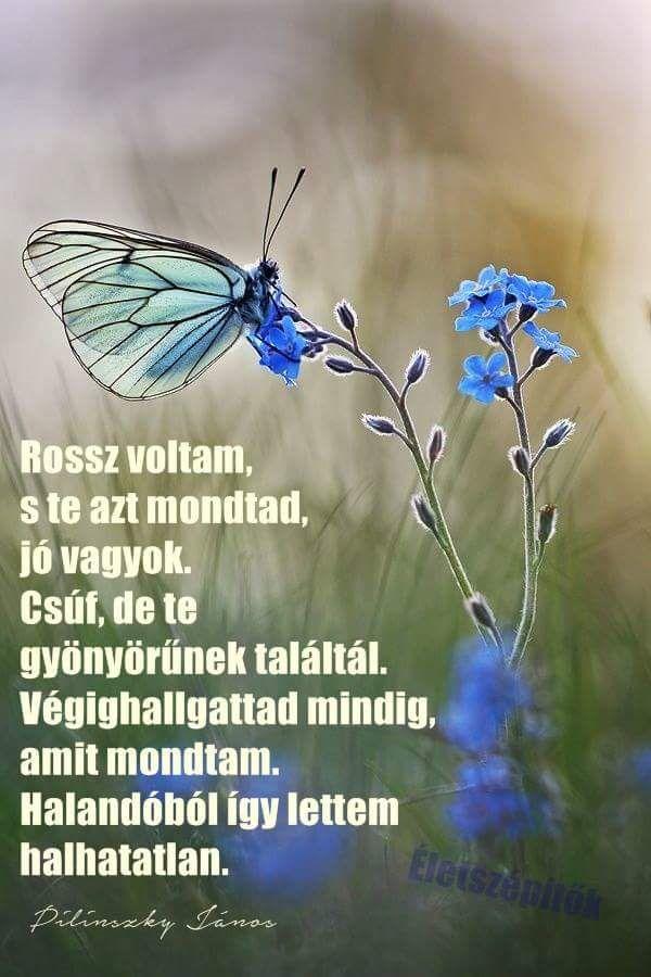 Pilinszky János idézet a változásról. A kép forrása: Életszépítők