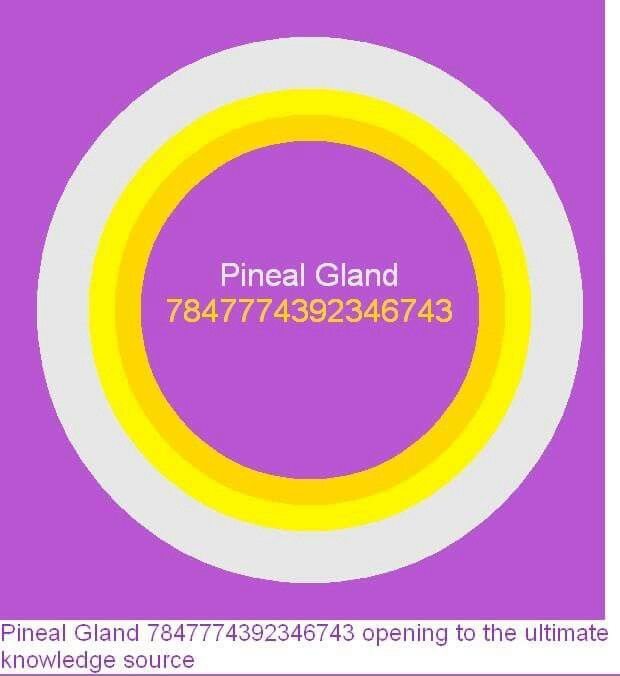 Pineal gland.