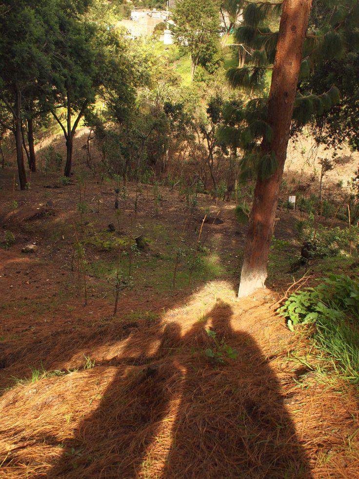 En la Quebrada Morací el sábado pasado hubo una jornada de recuperación - siembra de muchos árboles, y muchas actividades con la gente que vive cerca de ahí: capoeira (traída por algunos habitantes...