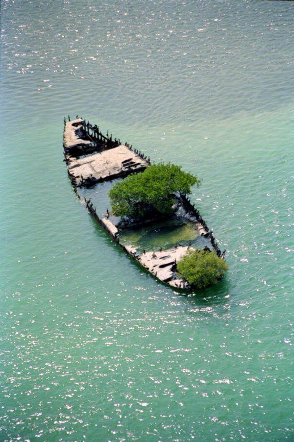Les arbres poussent partout ! #roisdumonde  Plus de découvertes sur Souterrain-Lyon.com