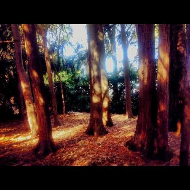 Wombat Gardens, Daylesford