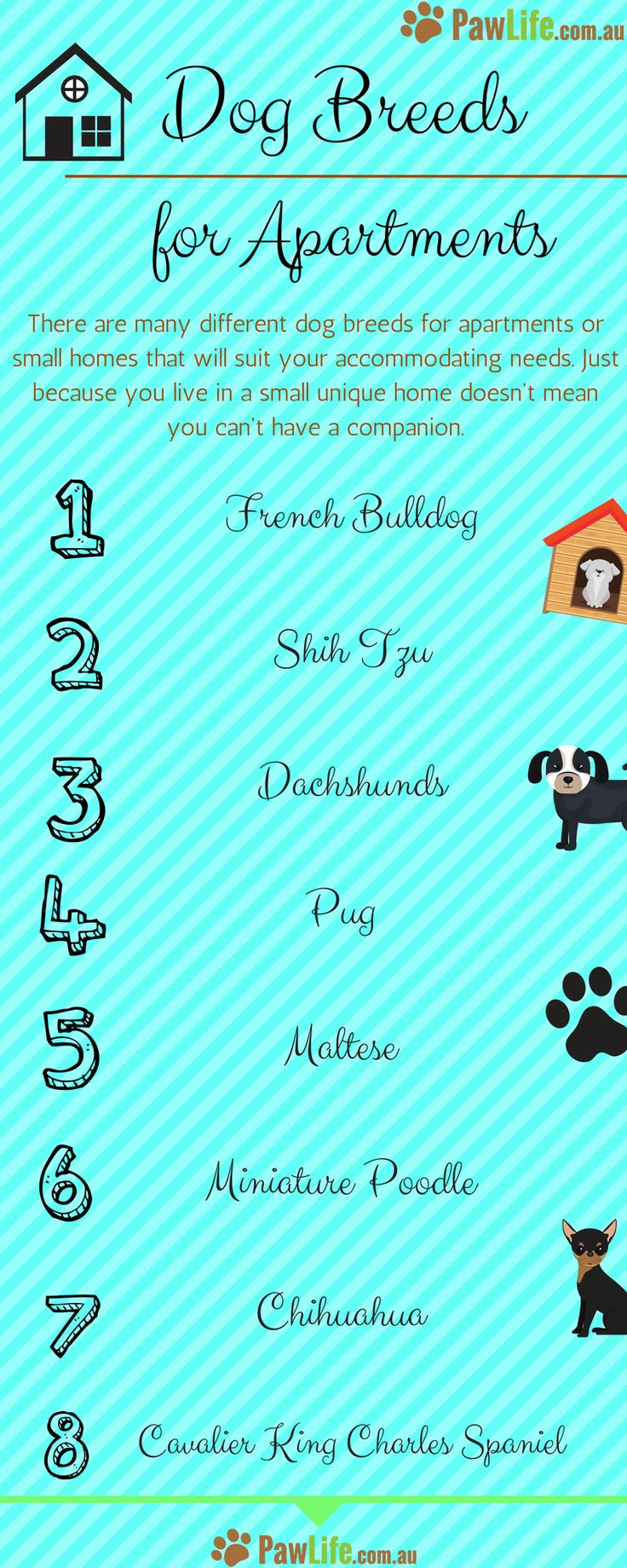 There are many different dog breeds for apartments or small homes that will suit your accommodating needs.