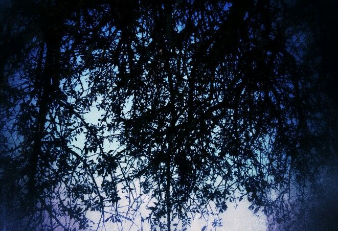 Στη σκιά των δέντρων