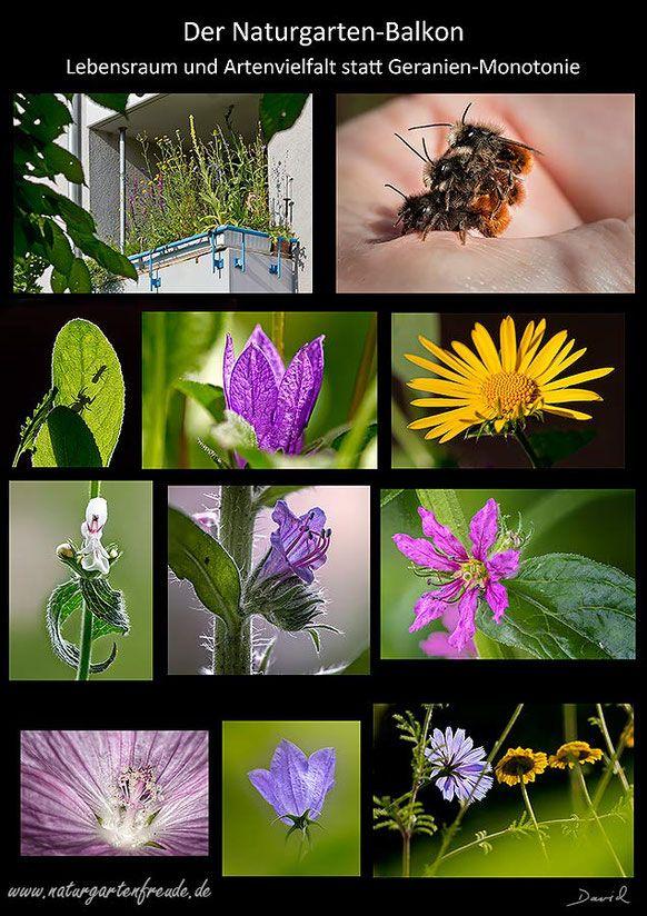 Naturgartenbalkon Balkon Balkonkasten Wildpflanzen Wildlife Garden Balcony Native Plants Balcony Through Wildbienen Insektenhotel Nisthilfen