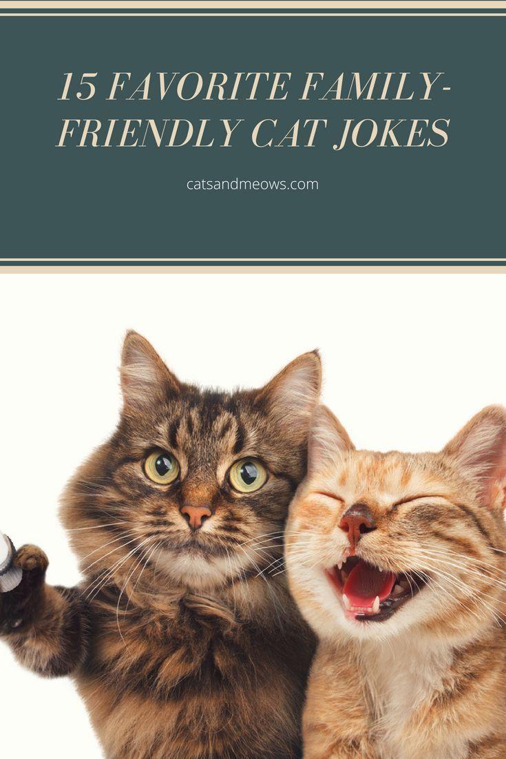 15 Favorite Family Friendly Cat Jokes Cats And Meows Cat Jokes Funny Cats Cat Training