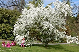 Alemanha Parque Primavera Arvores floridas Boneca Menina Grama Grugapark Essen Naturaleza