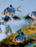 Ryby akwariowe jak transportować