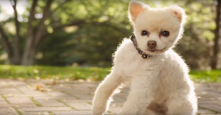 He Didn't Always Walk Crooked. But When He Peed On The Floor, His Former Humans Beat Him