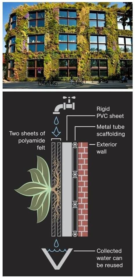 How Green Walls Work Illustration by Jason Treat, National Geographic.  Source: Patrick Blanc  Many living wall systems also have built-in irrigation systems in which water is harvested at the bottom of the wall and recirculated back to the top, as seen above.  The types of plants on green walls differ, but can include grasses, vines, and other climbing plants—all of which must have strong root structures, Green Roofs for Healthy Cities' Paul Erlichman said.