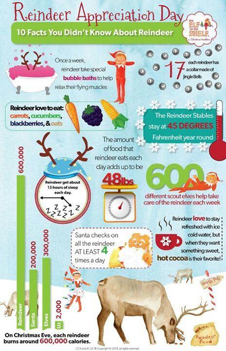 Reindeer Facts Christmas Pinterest