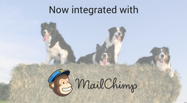 Send out marketing campaigns through ProPet in a flash with our new MailChimp integration! Sign up to take a test drive and try out this new feature for yourself.