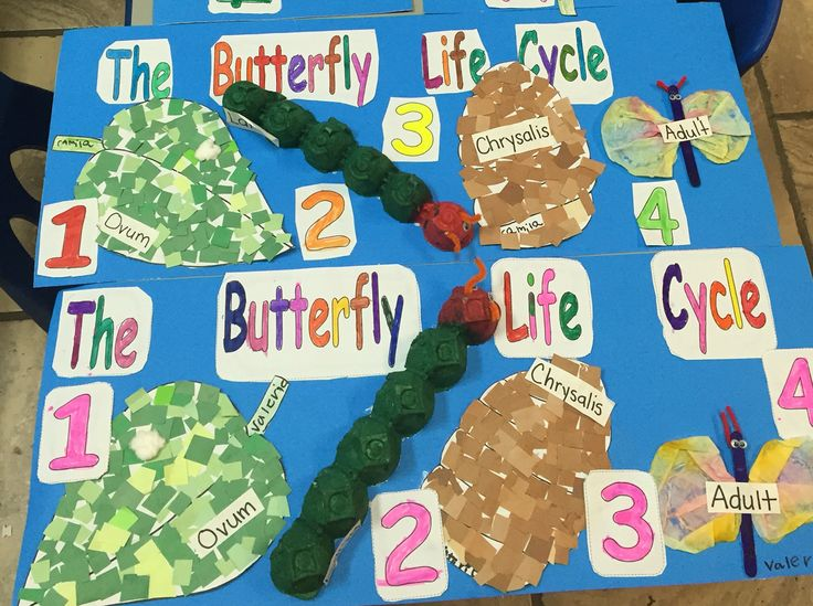 Butterfly Life Cycle Projects