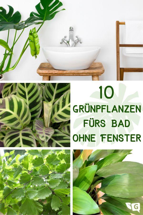 Pflanzen Furs Badezimmer Ohne Fenster 10 Grunpflanzen Gartendialog De Badezimmer Ohne Fenster Pflanzen Furs Bad Grunpflanzen