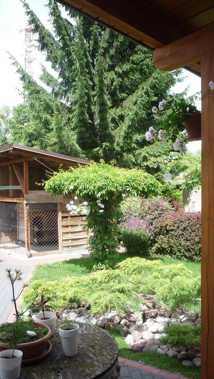 jeśli brakuje ci drzew na podwórku i chcesz by w ciągu jednego lata urosła ci taka 3 metrowa piękność. postaw stelaż - parasol i posadź dwie sadzonki winorośli. efekt murowany w jeden sezon.