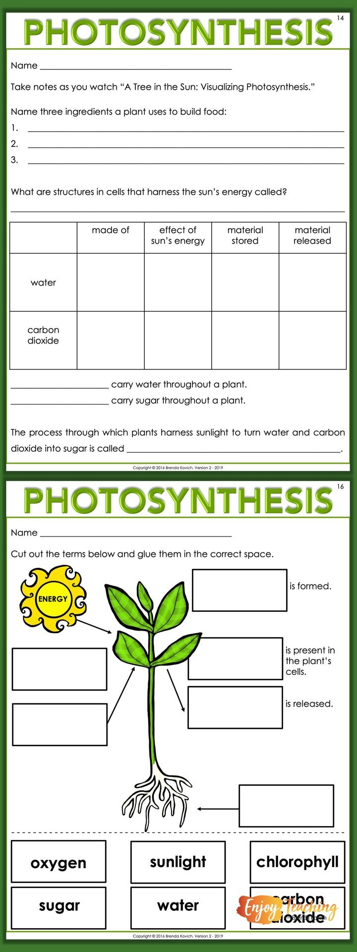 Enjoy Teaching Plants with Biology Activities for Kids in