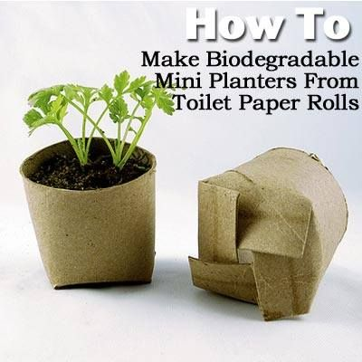 How To Make Biodegradable Mini Planters From Toilet Paper Rolls -