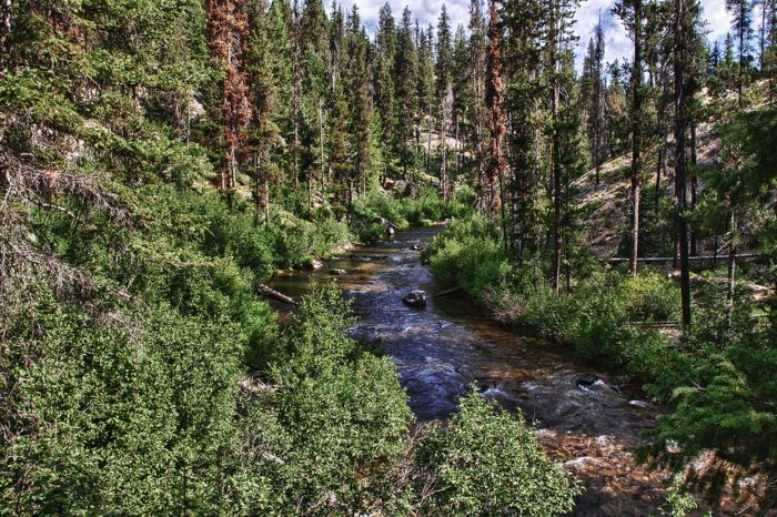 6. Crooked River, Boise National Forest