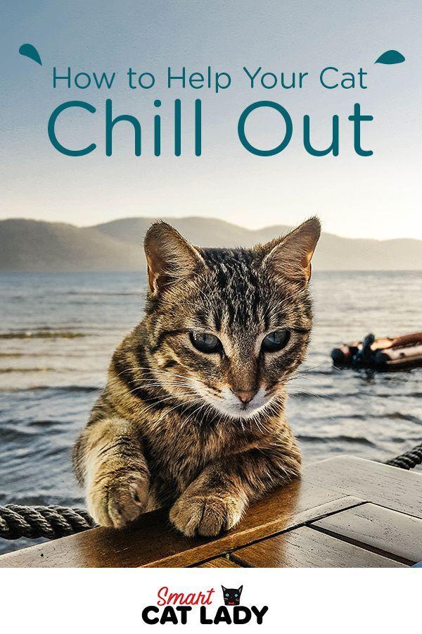 71d9b644cfe426f535d9e6f3818357e3 - How Do You Get A Cat To Calm Down