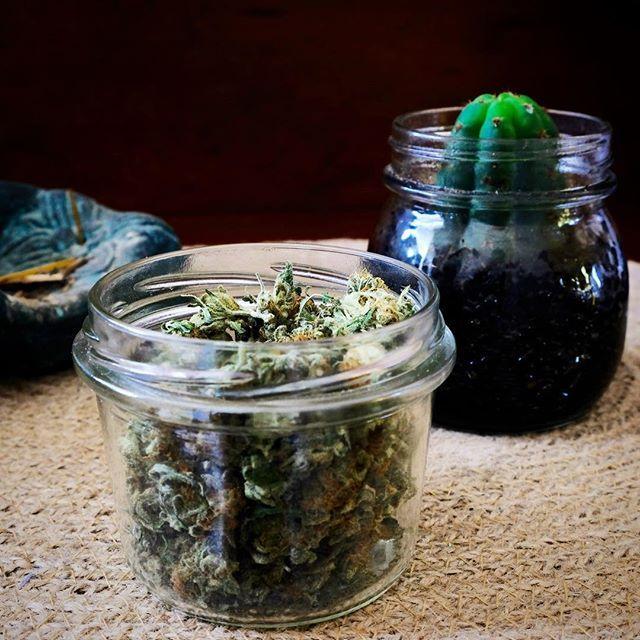 Cannabis. San Pedro. Plant medicines. Plant teachers. . . . . . . . #sanpedro #EchinopsisPachanoi #psychedelic #cactus #sanpedrocactus #thedailycloud #medicalmarijuana #medicinalmarijuana #medicalcannabis #medicinalcannabis #cannabis #marijuana #herbalvape #herbalvaporizer #weed #fuckcombustion #420 #trichome #terps #thc #cbd #420photography #cannabiscommunity #potheadsociety