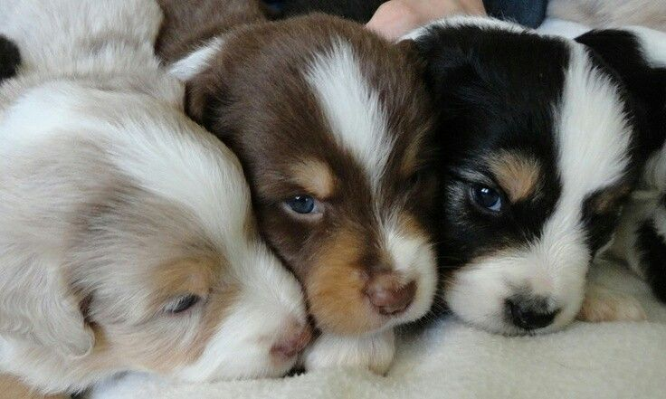 Awww! I'd so love a little snuggle and a nuzzle with these little poppets right now!