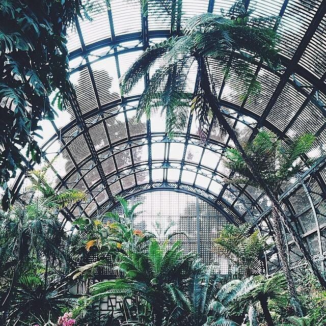 An excursion to Balboa Park Botanical Gardens with UO San Diego.