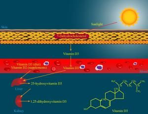 Vitamin D Insufficiency: A Surprising Trend In Athletic Adults
