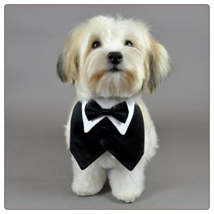 Ok, after seeing this, I have decided I need a puppy as the ring bearer and they have to have a little tux collar!
