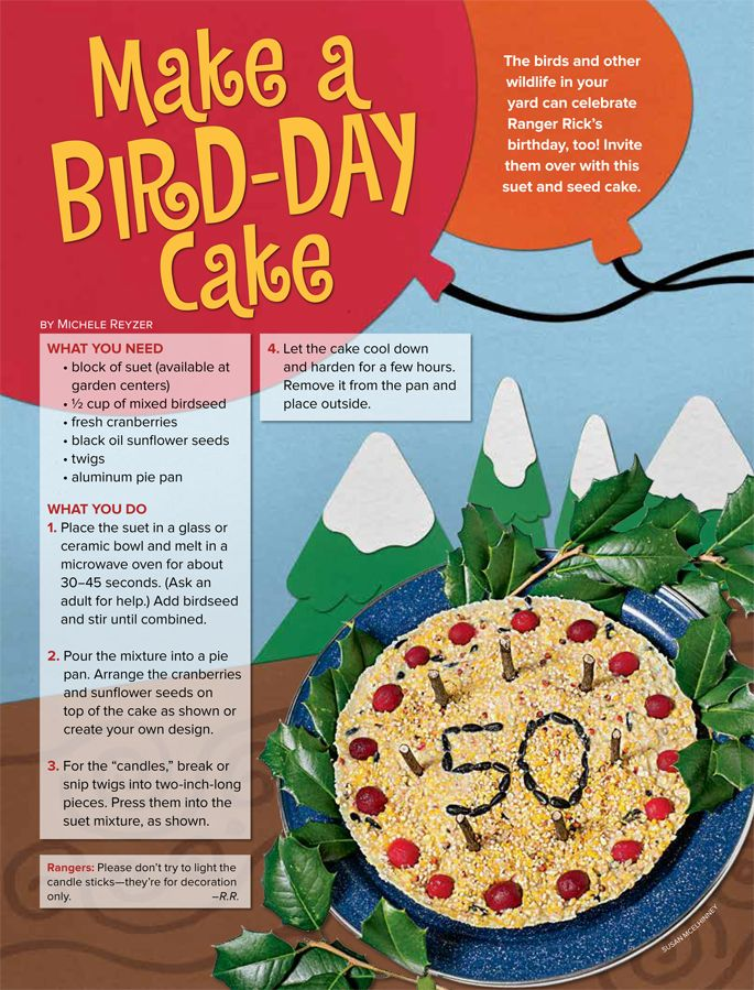 Make a cake for birds and other wildlife in your yard using a pie tin, birdseed, sunflower seeds, suet, and cranberries.