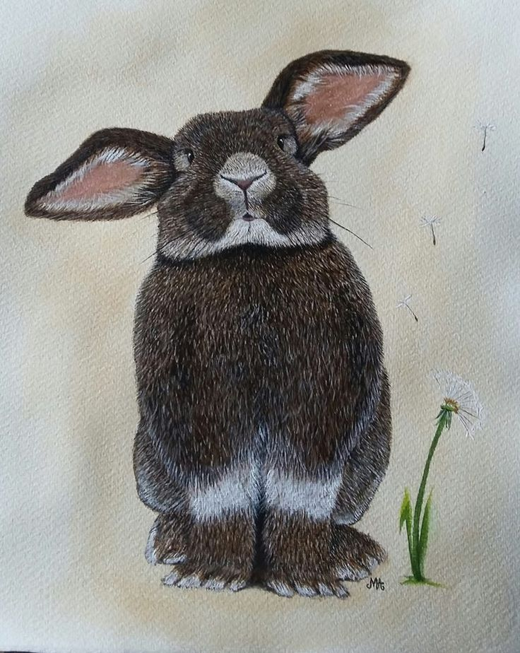 lovely rabbit painting by Mies van Lankveld Oude Avenhuis
