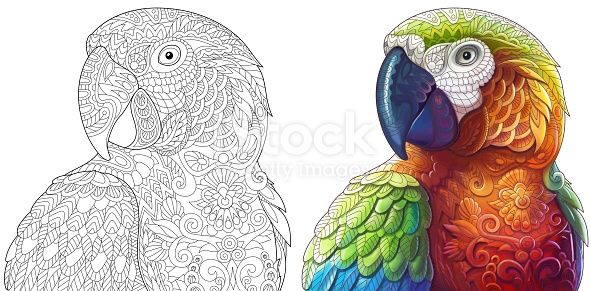 Macaw Parrot Monochrome Coloring Page And Colored Sample Freehand