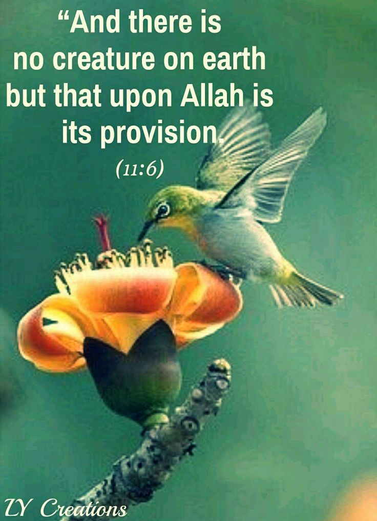 And there is no creature on earth but that upon Allah is its provision.