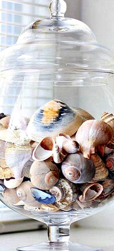 How to clean Sea Shells the right way for display