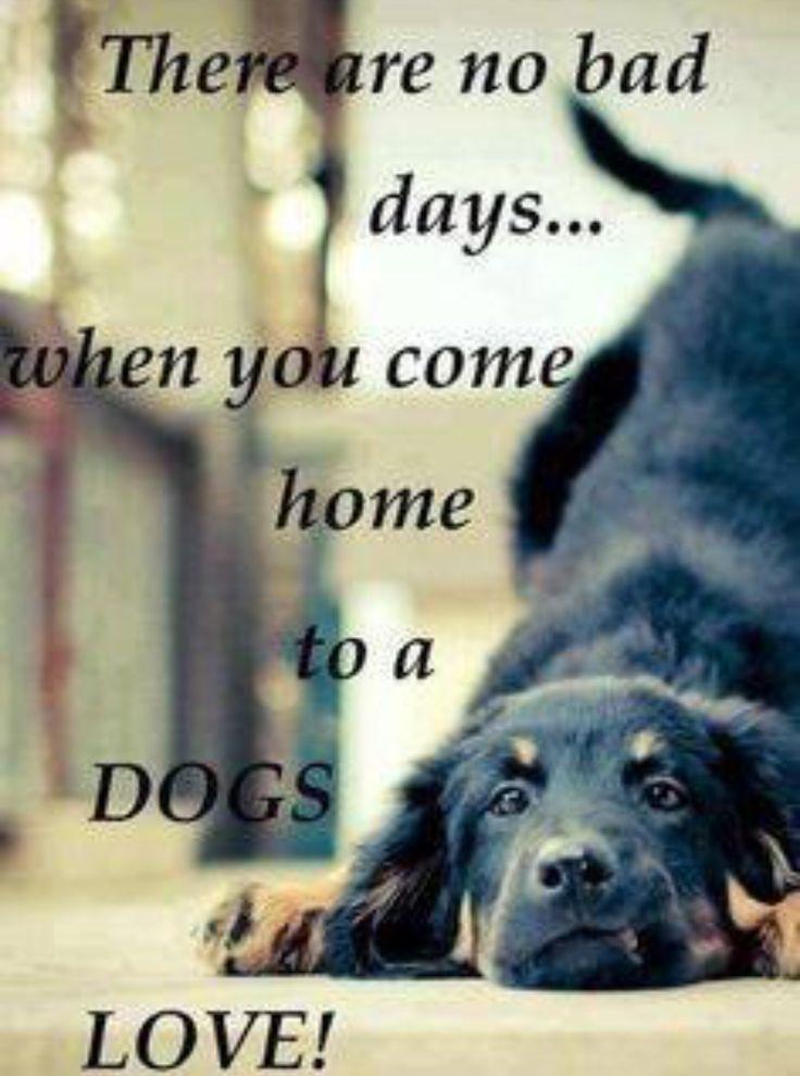 Resultado de imagen de dog phrases