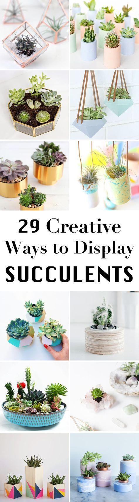 best Succulents images on Pinterest