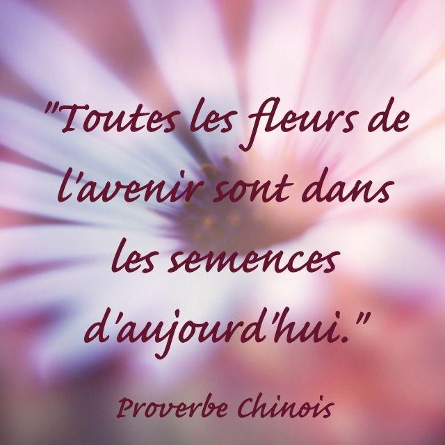 """""""Toutes les fleurs de l'avenir sont dans les semences d'aujourd'hui.""""  Proverbe chinois"""