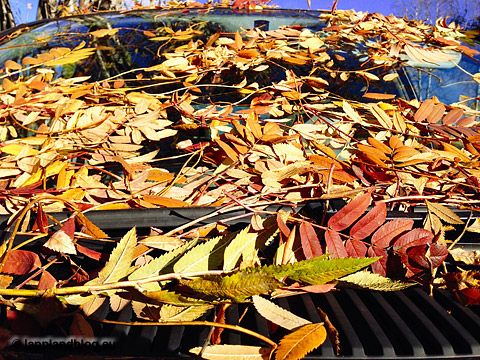Herbstlaub auf Motorhaube Arvidsjaur