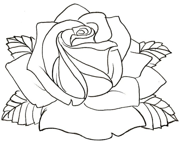 Line Art Rose Tattoo : Best drawing roses images on pinterest