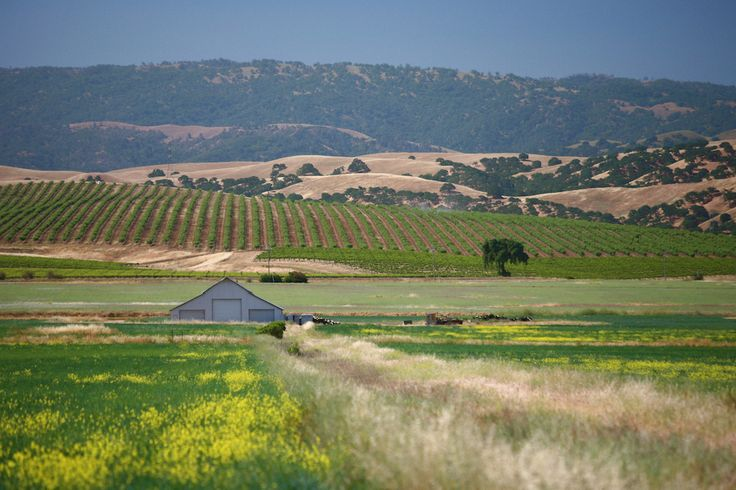 The Official Guide to Livermore California, Discover the Finest Wineries in Livermore CA, including Wine Tours at famous wineries like Wente Vineyards