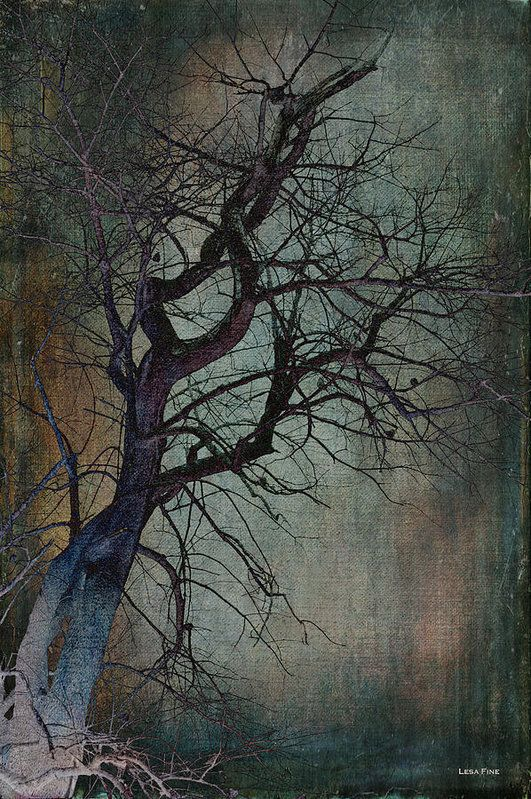 #Tree #Twisted, branches, dead, sultry, moody, #staging art #interior design, interior decorating, home styling, photo art, Lesa Fine