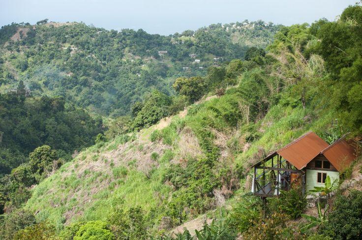 Échange et visite des Blue Mountains en Jamaïque (Detour Local) -> Mount Edge Guest House est littéralement à flan de montagne www.detourlocal.com/echange-visite-velo-blue-mountains-jamaique/