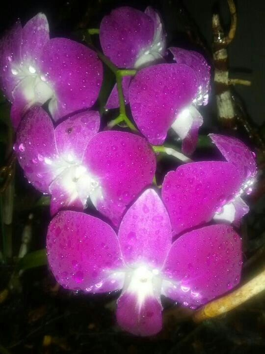 Orchids Palm Bay Florida