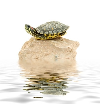 how to make basking area for turtles
