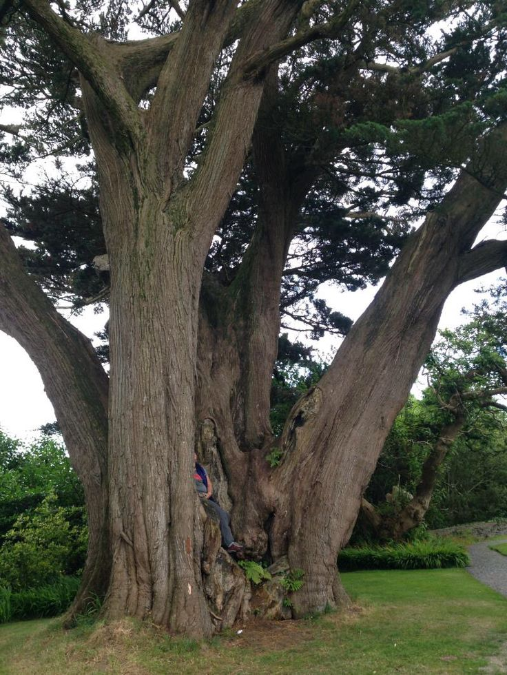 Tree in Ireland!
