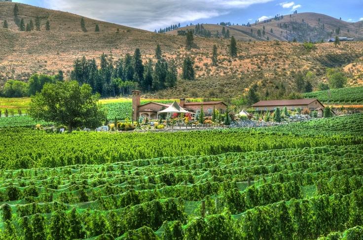 Tsillan Cellars Winery - Chelan, WAFavorite Places, Cellars Wineries, Washington States, Favorite Chelan, Chelan Wineries, Wineries Tsillancellar, States Locations, Tsillan Cellars, Sip Vino