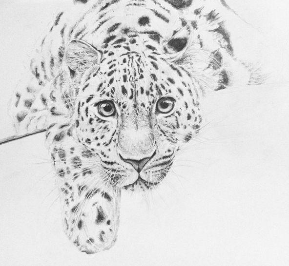 #draw #drawing #paint #painting #art #wild #animal #animals #lampart #pencil #paper #DeviantArt