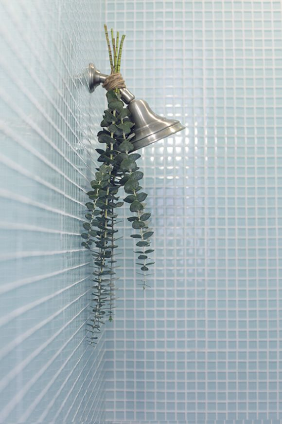 Eucalyptus on shower head with blue tile
