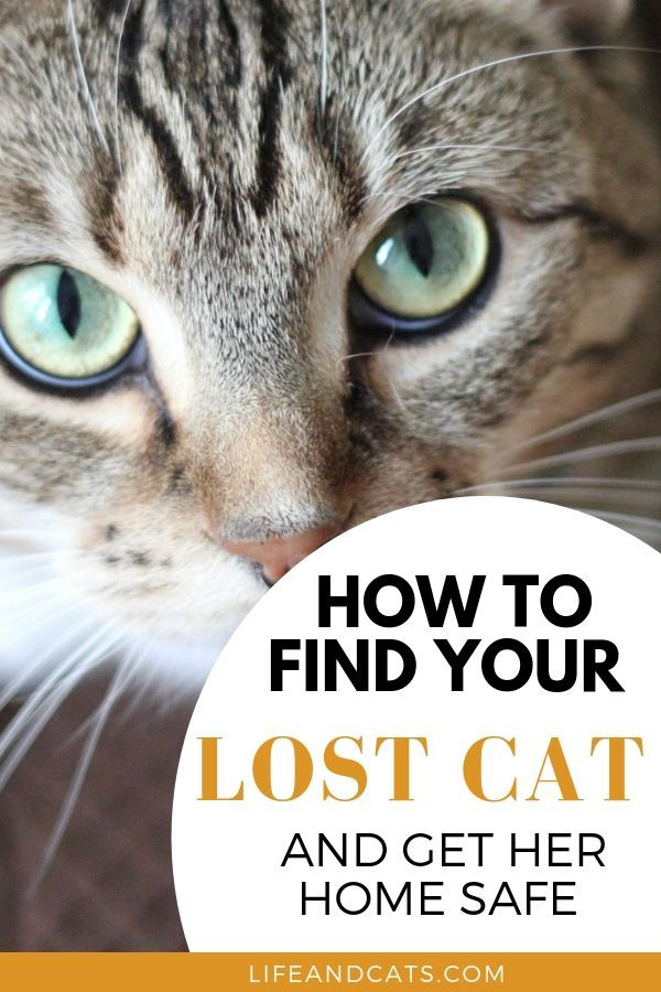 Get Kitty Home Fast Action Plan To Find A Lost Cat Life Cats Lost Cat Lost Cat Poster Kitten Health